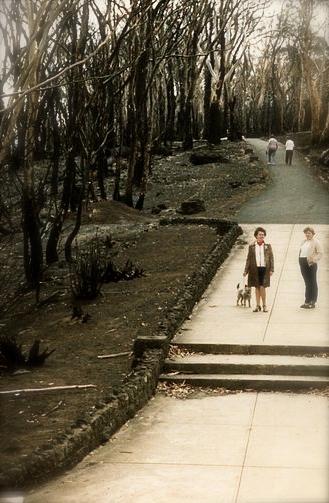 Mt Macedon after Ash Wednesday bushfires