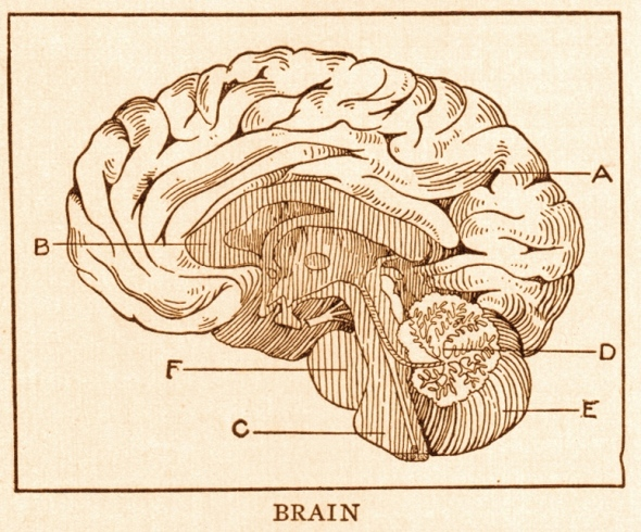 Brain_page_368