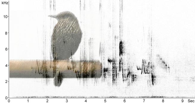 Sonogram image: http://www.fssbirding.org.uk/bluerockthrushsonogram.htm Thrush image: Wikimedia Commons